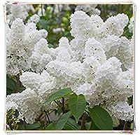 ヒヤシンス球根&エキゾチックで芳香のある有機観賞植物とフラワーアレンジメント