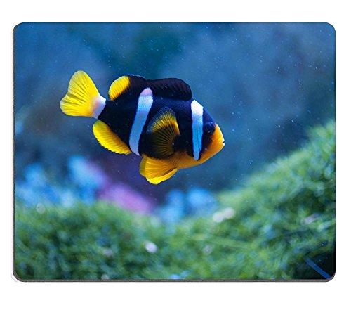 Liili Mauspad Naturkautschuk Mousepad klein Anemonenfisch in das Aquarium Bild-ID 12539939