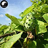 Samen-Paket Nicht Pflanzen: Stück: Kaufen Kiwano Fruchtsamen Seed nMetuliferus Kiwano