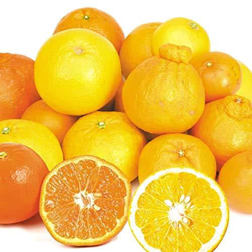 国華園 8品種の旬の柑橘セット 8種 約5kg1組 ご家庭用