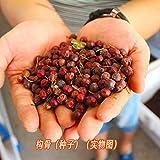 Semillas de cidra sin aguijón, también conocidas como espina de gato, espina de tigre, arbustos de hoja perenne o árboles pequeños 300 granos-1 catty_Holly tree semillas 200 cápsulas