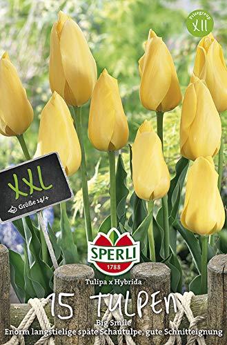 Sperli 455205 Tulpe