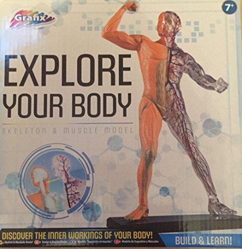 Explorez vos muscles Body- squelette & modèle