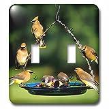 15 Best 3dRose Bird Feeders