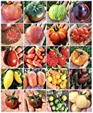 200 GRAINES de TOMATE dans 20 RARES VARIÉTÉS RICHES en NUTRITIVES + PETIT GUIDE de la CULTURE de la TOMATE GÉANTE: TOMATE GÉANTE ITALIENNE, BLACK KRIM, GREEN ZEBRA, INDIGO ROSE, CHEROKEE PURPLE, CŒUR DE BEUF ROSE, COSTOLUTO FIORENTINO, ROMA, SAN MARZANO, HEINZ, ORANGE STRAWBERRY, BANANA LEGS, ORANGE BANANA, YELLOW et CHOCOLATE PEAR, TOMATE CERISE ROUGE, JAUNE, BLANCHE et NOIRE