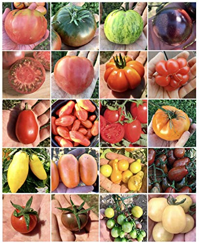 Semi Strani - Gemüsesamen & -pflanzen