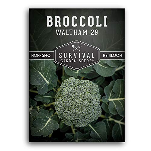 Survival Garden Seeds - Waltham 29 Broccoli Seed for Planting - Packet with...