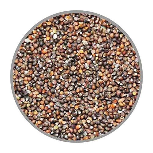 Hungenberg's Perillasaat braun 1 kg