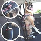 Zoom IMG-2 ozuar 5pcs pet safety car
