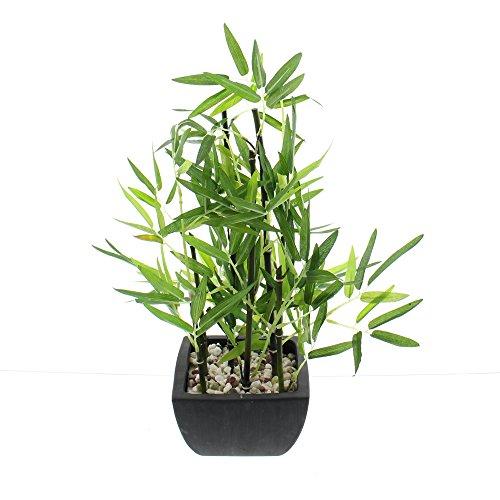 FRANK FLECHTWAREN Deko-Bambus im Topf