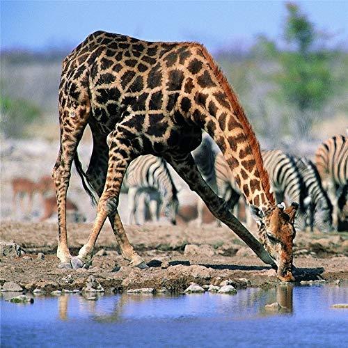 ROG000 5D Full DIY Full Painting Diamant Bohrer Riverside Animal Giraffe Diamond Malerei Handgemachtes Kristall Strass Wohnzimmer Dekor Wandkunst Handwerk 60x60cm W1508