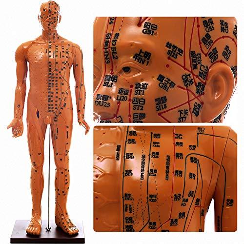 YZJYB Akupunktur Puppen Akupunktur Anatomie Modell mit Super Clear Beschriftung Angelegte und Druckpunkt und zwölf Meridianen für Das Lernen Display Teaching Medical Modell