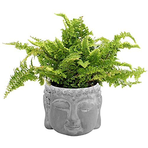 Cabeza de Buda de cemento Ø15x12cm, maceta, cabeza de planta, gris