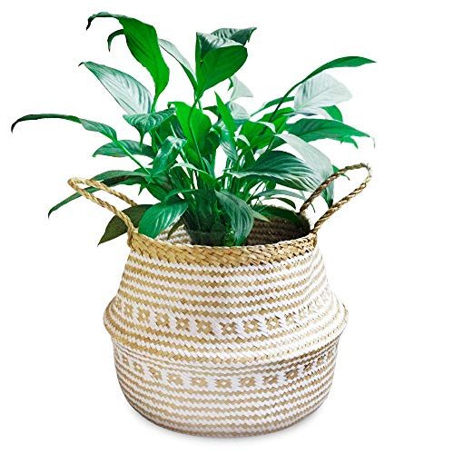 La Maia Small Natural & Plus Woven Seagrass Belly Plant Basket with Handles Woven Planter Basket for Storage, Laundry, Picnic, and Beach Bag (Small, Plus Seagrass White)