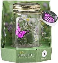 Butterfly in a Glass Jar - Pink Morpho