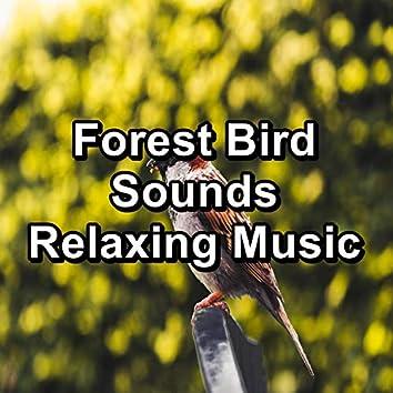 Forest Bird Sounds Relaxing Music