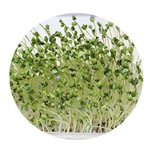 Chicchi integrali di grano saraceno dolce tartare di semi di grano saraceno sorgo rosso 300 grani