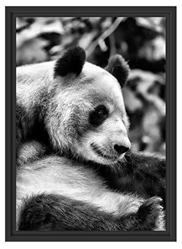 Leuke pandabeer in schaduwvoegen fotolijst | kunstdruk op hoogwaardig galeriekarton | hoogwaardige canvasafbeelding alternatief 55x40