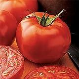 New Yorker Tomato...image