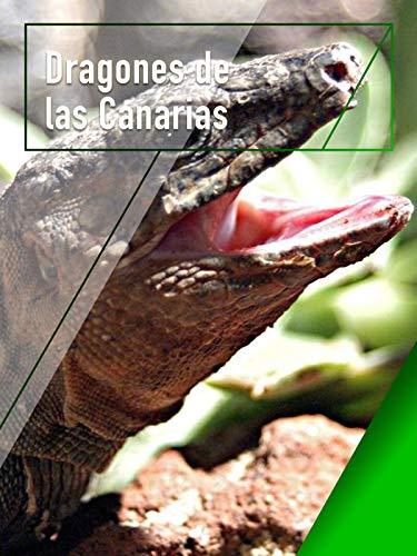 Dragones de las Canarias