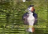 Faszination Haubentaucher (Wandkalender 2022 DIN A4 quer)