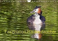 Faszination Haubentaucher (Wandkalender 2022 DIN A4 quer): Intime Einblicke in das Leben des Haubentauchers (Monatskalender, 14 Seiten )
