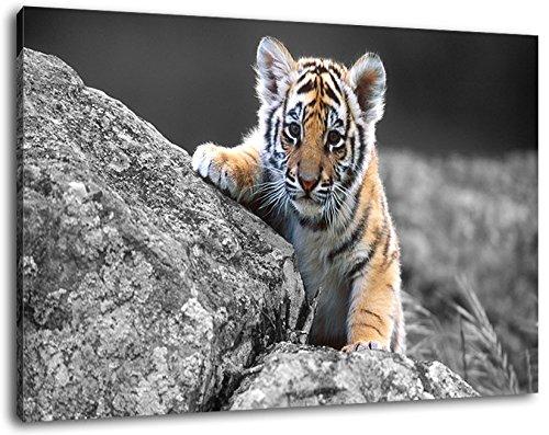 Leuke tijgerafbeelding op canvas, enorme afbeeldingen? XXL compleet ingelijst, kant-en-klaar ingelijst, kunstdruk, wandafbeelding