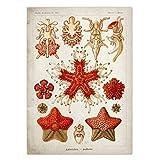 Zabats Marine Creatures Vintage Poster Quallen Korallen