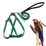 ASOCEA Piuma Regolabile Tether Uccello Harness e guinzaglio per Grande Razza Uccelli pappagalli