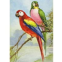 大人のための5Dダイヤモンドペインティングキットナンバーキットによる鳥の動物ダイヤモンドアーツクラフトの家の装飾でペイント、20x26インチ(M9-1352)