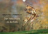 Belgischer Schäferhund - Der Malinois in Action (Wandkalender 2017 DIN A4 quer): Der Kalender für Malinois-Freunde (Monatskalender, 14 Seiten ) (CALVENDO Tiere)