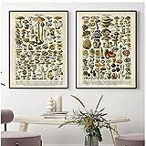 BINGJIACAI Setas de plantas Carteles retro Lienzo Pintura Educación Ciencia Arte de la pared Impresiones de imágenes modulares Interior de la cocina Decoración para el hogar-42x60cmx2 Sin marco