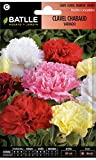 Semillas de Flores - Clavel Chabaud Doble variado - Batlle