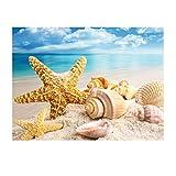 MXJSUA DIY 5D Kits de Pintura de Diamante Taladro Completo Cuentas Redondas Pintura artística decoración de Pared (35x45 cm) Concha de Estrella de mar