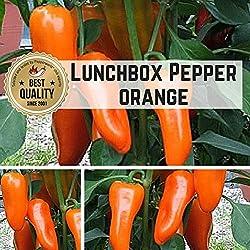 Pepperworld Lunchbox Pepper Orange Chili-Saatgut, 10 Korn, Chili-Schote zum Anpflanzen, nicht scharf