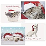Masterpiece Studios 16-Count Boxed Assorted Christmas Cards, 4 each of 4 Different Designs, 6.25 x 4.62, Purrrfect Holidays