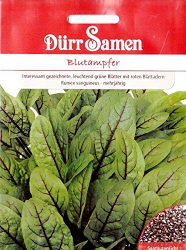 Blutampfer, Rumex sanguineus, ca. 500 Samen