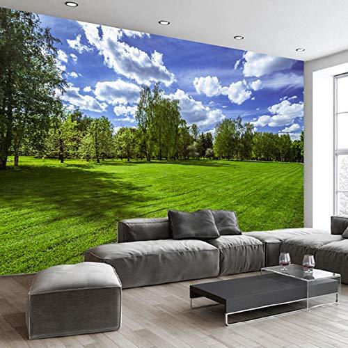 Photo murale-Avion Sunrise non tissé-Ciel Nuages papier peint Panorama 742