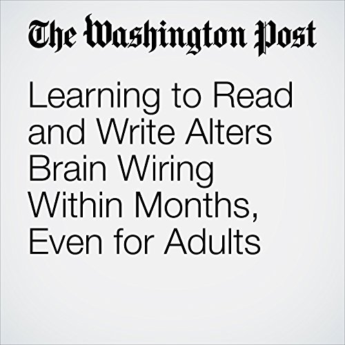 Learning to Read and Write Alters Brain Wiring Within Months, Even for Adults copertina