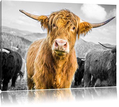 Pixxprint Blick Einer Kuh an der Weide als Leinwandbild | Größe: 120x80 | Wandbild| Kunstdruck | fertig bespannt