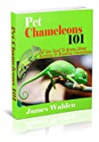 Pet Chameleons 101: All You Need To Know About Keeping & Breeding Chameleons