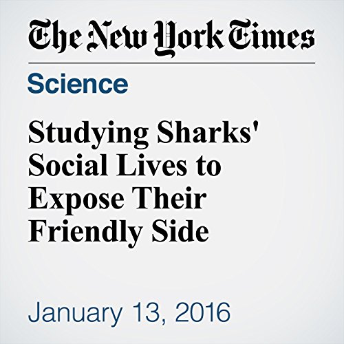 Studying Sharks' Social Lives to Expose Their Friendly Side audiobook cover art