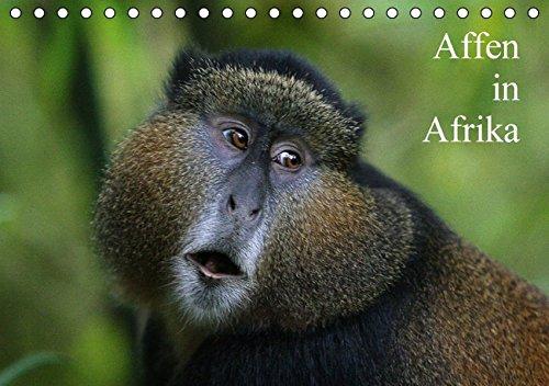 Affen in Afrika (Tischkalender 2016 DIN A5 quer): Affen Afrikas in ihrem natürlichen Lebensraum (Monatskalender, 14 Seiten ) (CALVENDO Tiere)