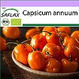 SAFLAX - BIO - Peperoncino - Habanero Orang - 20 semi - Capsicum annuum