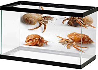 Best caribbean hermit crab for sale Reviews