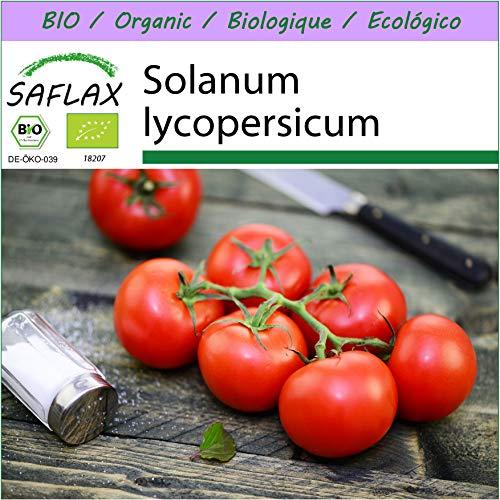 SAFLAX - BIO - Tomate - Matina - 10 Samen - Solanum lycopersicum