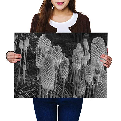 Destination Vinyl Posters A2 BW - Hot Pokers Lily Flower Plant Garden Art Print 59.4 X 42 cm 280gsm satin gloss photo paper #43430