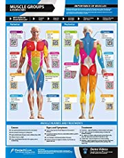 Muskelgrupper och övningar | främre och bakre muskler och övningar | laminerad hem & gym affisch | GRATIS online video träningsstöd | Storlek - 594 mm x 420 mm (A2) | Förbättrar din personliga fitness