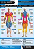 "Muscle Groups & Exercises | Anterior & Posterior Muscles & Exercises | Laminated Home & Gym Poster | Free Online Video Training Support | Size - 33"" x 23.5"" 