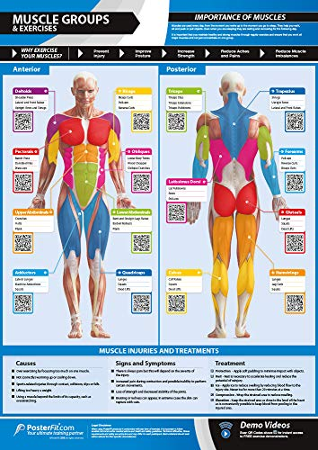 Muscle Groups & Exercises | Anterior & Posterior...